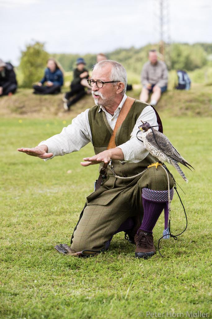 Falkoner Frank Skårup og falcon named Berit. Photo: Peter Horn Møller.