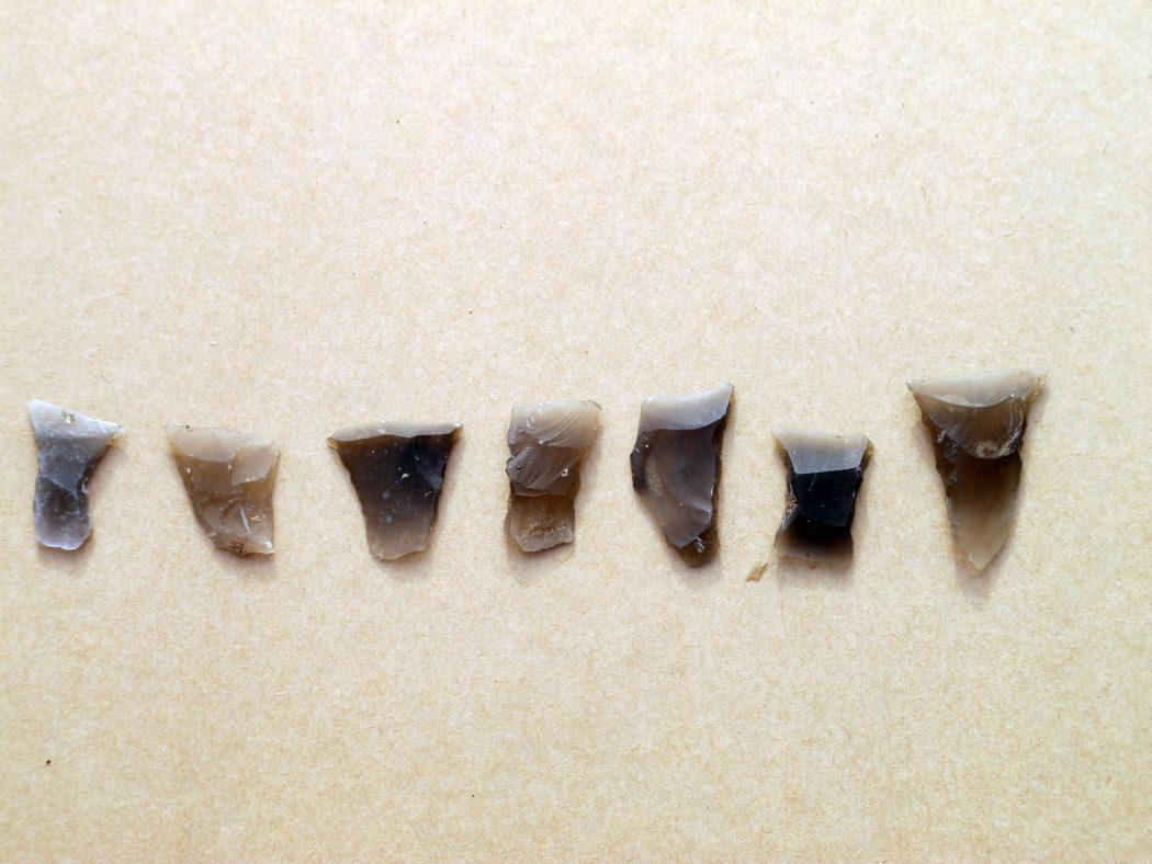 Pilespidser af flint - de såkaldte tværpile - kan bruges til at fastslå bopladsens alder og  daterer fundene til til Ertebøllekultur, ca. 5.400-4.250 f.Kr. Foto: Jørgen Dencker