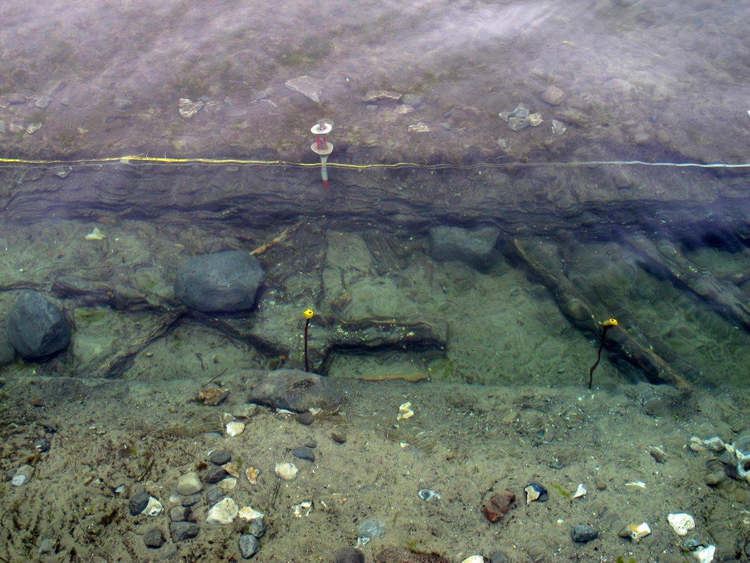 Velbevarede hasselstager og sten, der engang for 6-7.000 år siden har udgjort en del af et fangstsystem. Foto: Jørgen Dencker