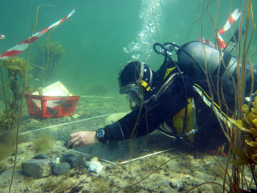 En af Vikingeskibsmuseets Marinarkæologer i dykkerudstyr.