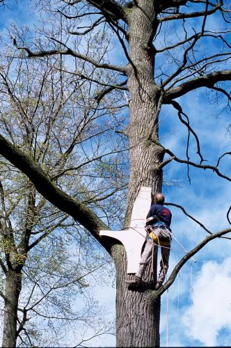 Bådebyggeren har en skabelon med oppe i træet, for at finde frem til den perfekte form til sit kølsvin. Foto: Werner Karrasch, Vikingeskibsmuseet